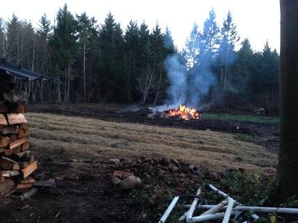 Burning stumps on the 2016 field