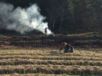 Weeding the garlic and burning sticks