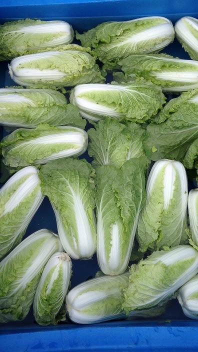 Mini napa cabbage