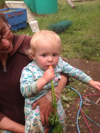 Sampling our carrots