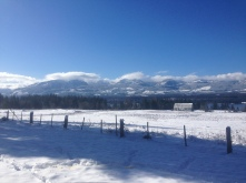 Lone Pine Farm on Denman